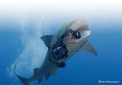 Nikon_d80_requin